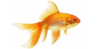 Аквариумные рыбки купить,